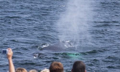WhaleWatchingPanama